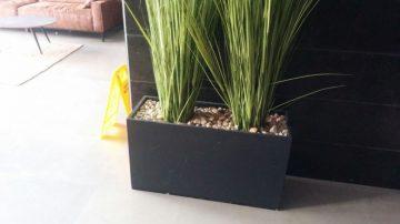 צמחייה ועיצוב לובי