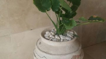 עיצוב לובי עם צמחייה