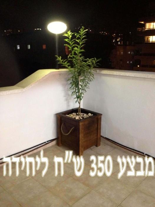 אדנית עץ פינתית באורך 50 סמ